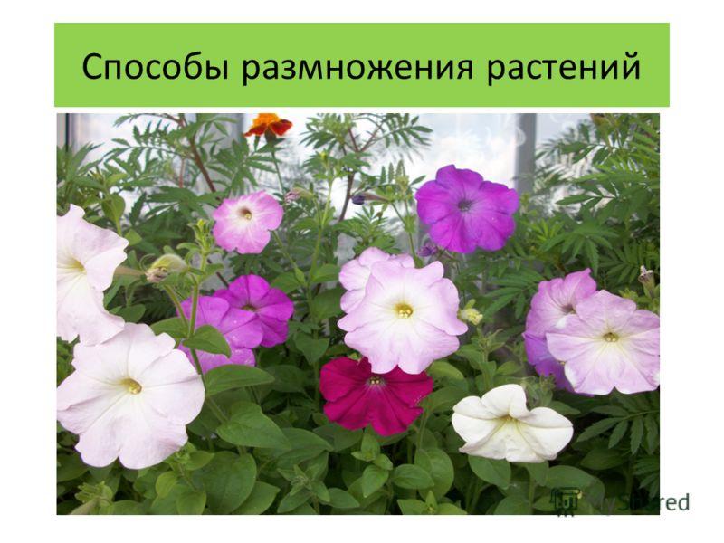 Способы размножения растений