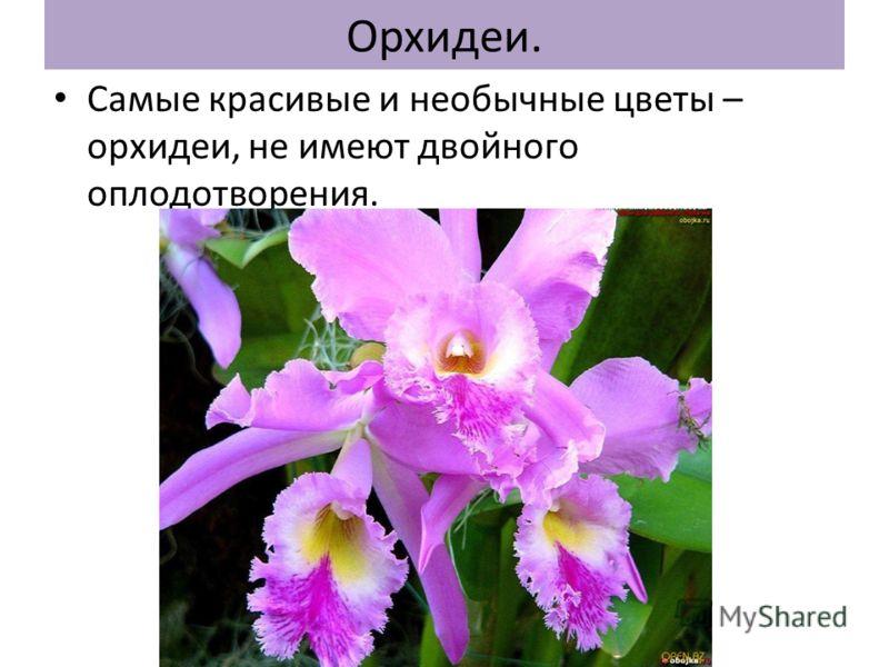 Орхидеи. Самые красивые и необычные цветы – орхидеи, не имеют двойного оплодотворения.