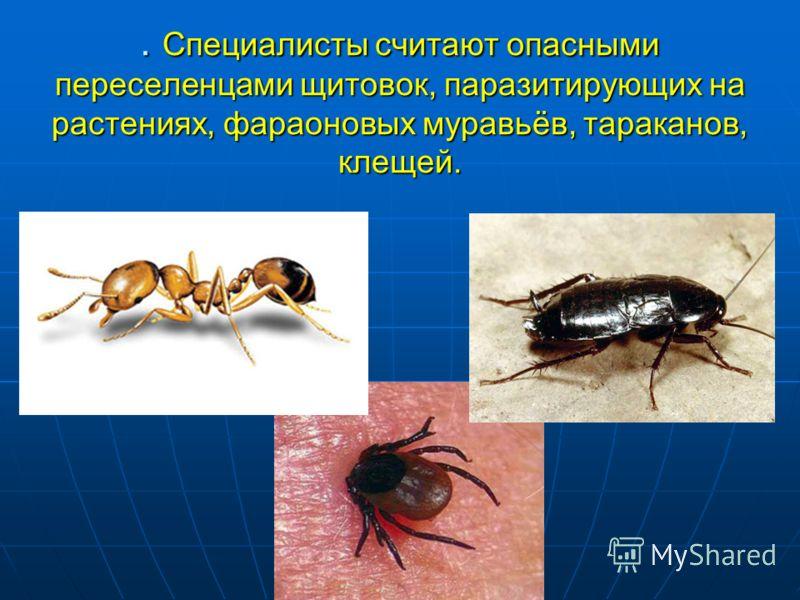 . Специалисты считают опасными переселенцами щитовок, паразитирующих на растениях, фараоновых муравьёв, тараканов, клещей.