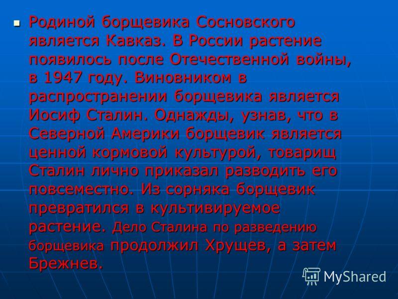 Родиной борщевика Сосновского является Кавказ. В России растение появилось после Отечественной войны, в 1947 году. Виновником в распространении борщевика является Иосиф Сталин. Однажды, узнав, что в Северной Америки борщевик является ценной кормовой