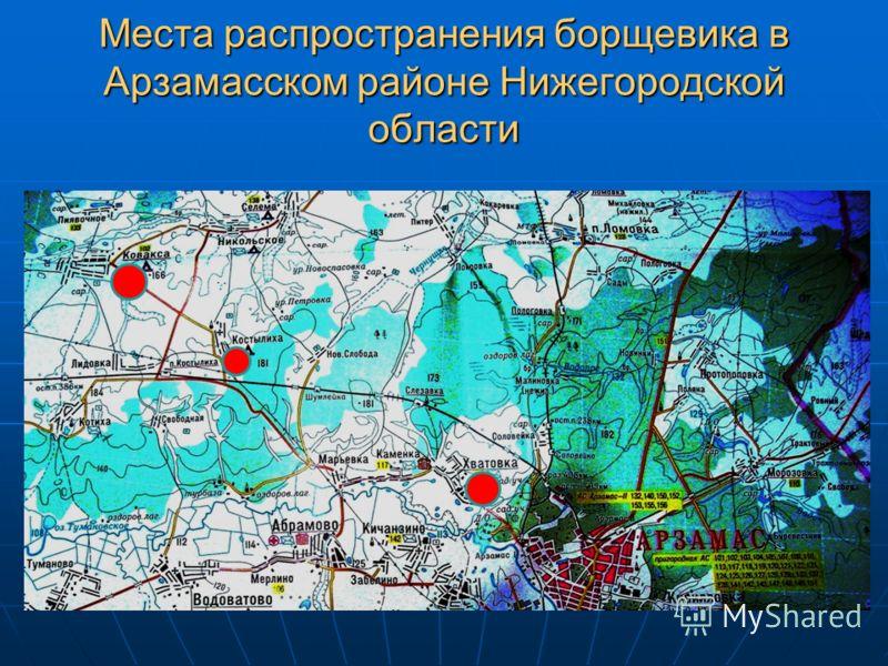 Места распространения борщевика в Арзамасском районе Нижегородской области