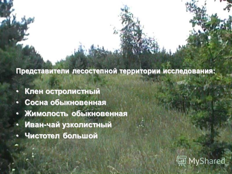 Результаты исследования: Практические: Мы исследовали территорию леса площадью около 1 км²; Мы собрали более 50 гербарных образцов распространенных видов; Мы сделали 5 фотографий распространенных видов растений; Мы сделали краткое описание распростра