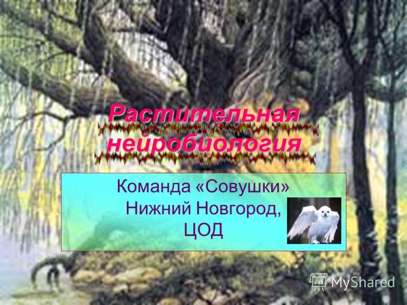 Растительная нейробиология Команда «Совушки» Нижний Новгород, ЦОД
