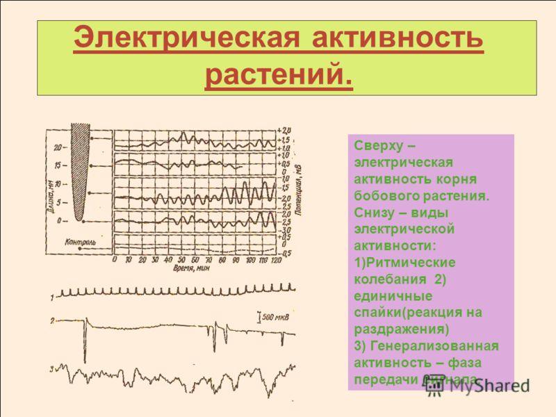 Электрическая активность растений. Сверху – электрическая активность корня бобового растения. Снизу – виды электрической активности: 1)Ритмические колебания 2) единичные спайки(реакция на раздражения) 3) Генерализованная активность – фаза передачи си