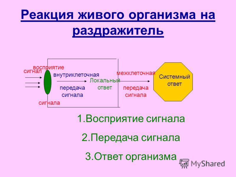 Реакция живого организма на раздражитель сигнал восприятие сигнала внутриклеточная передача сигнала Локальный ответ межклеточная передача сигнала Системный ответ 1.Восприятие сигнала 2.Передача сигнала 3.Ответ организма