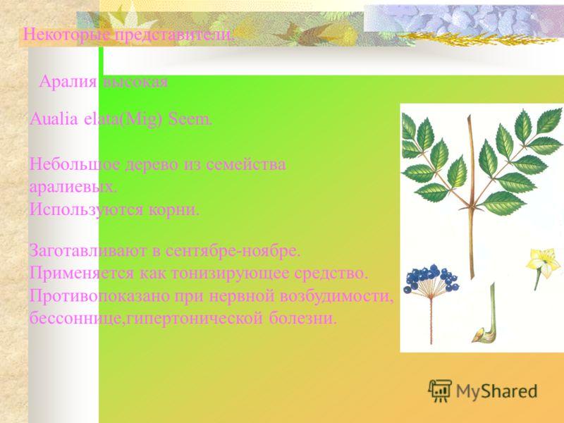 Некоторые представители. Аралия высокая Aualia elata(Mig) Seem. Небольшое дерево из семейства аралиевых. Используются корни. Заготавливают в сентябре-ноябре. Применяется как тонизирующее средство. Противопоказано при нервной возбудимости, бессоннице,