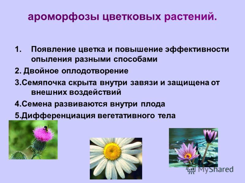 ароморфозы цветковых растений. 1.Появление цветка и повышение эффективности опыления разными способами 2. Двойное оплодотворение 3.Семяпочка скрыта внутри завязи и защищена от внешних воздействий 4.Семена развиваются внутри плода 5.Дифференциация вег