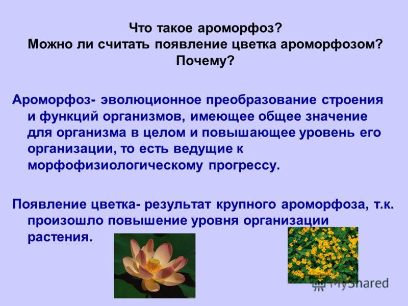 Что такое ароморфоз? Можно ли считать появление цветка ароморфозом? Почему? Ароморфоз- эволюционное преобразование строения и функций организмов, имеющее общее значение для организма в целом и повышающее уровень его организации, то есть ведущие к мор