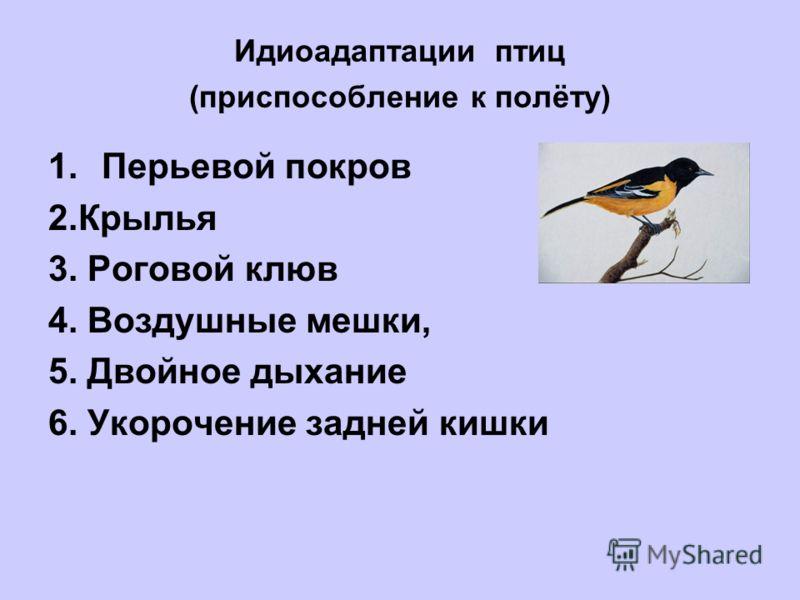 Идиоадаптации птиц (приспособление к полёту) 1.Перьевой покров 2.Крылья 3. Роговой клюв 4. Воздушные мешки, 5. Двойное дыхание 6. Укорочение задней кишки