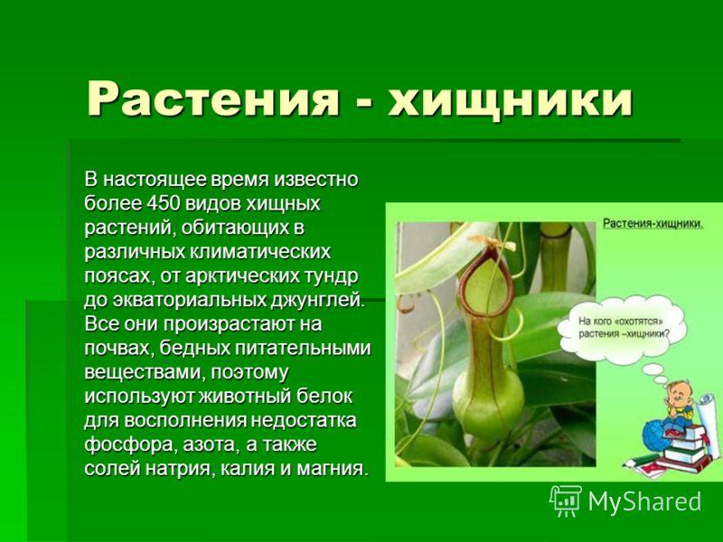Экстремальная ботаника что скрывают растения хищники Институт паразитологии в москве лечение от паразитов