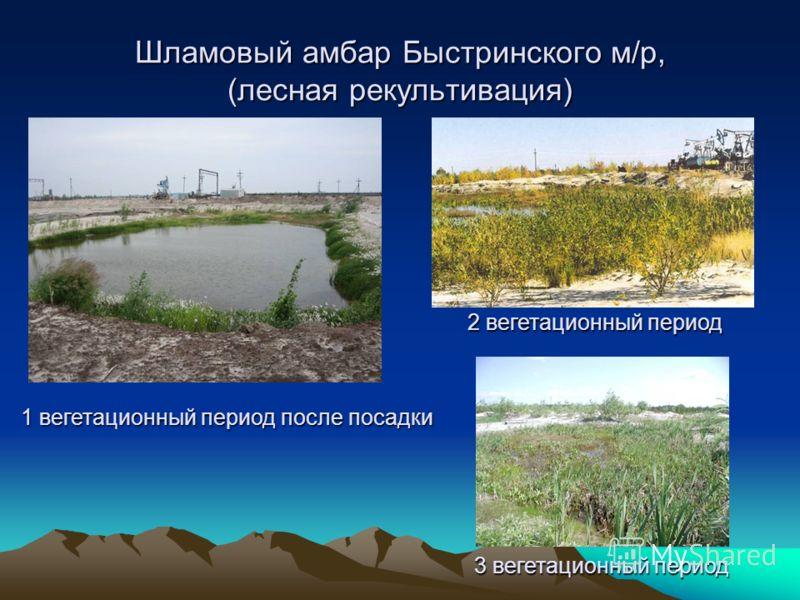 Шламовый амбар Быстринского м/р, (лесная рекультивация) 1 вегетационный период после посадки 2 вегетационный период 3 вегетационный период