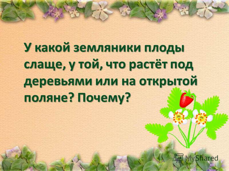 У какой земляники плоды слаще, у той, что растёт под деревьями или на открытой поляне? Почему?