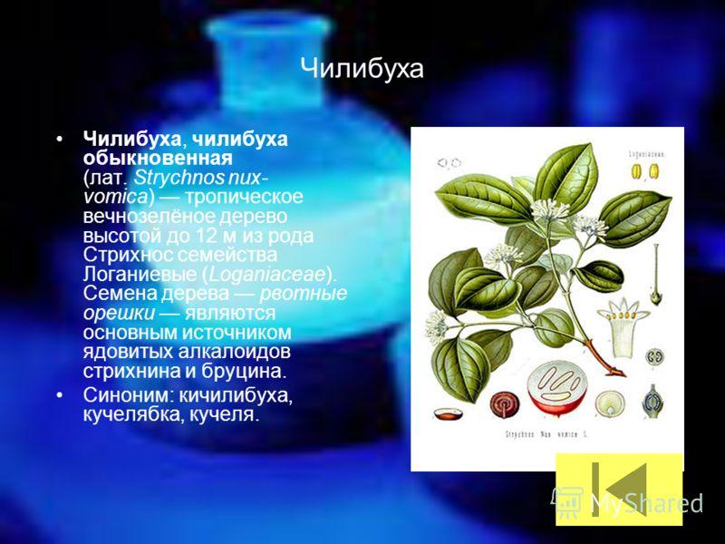 Чилибуха Чилибуха, чилибуха обыкновенная (лат. Strychnos nux- vomica) тропическое вечнозелёное дерево высотой до 12 м из рода Стрихнос семейства Логаниевые (Loganiaceae). Семена дерева рвотные орешки являются основным источником ядовитых алкалоидов с
