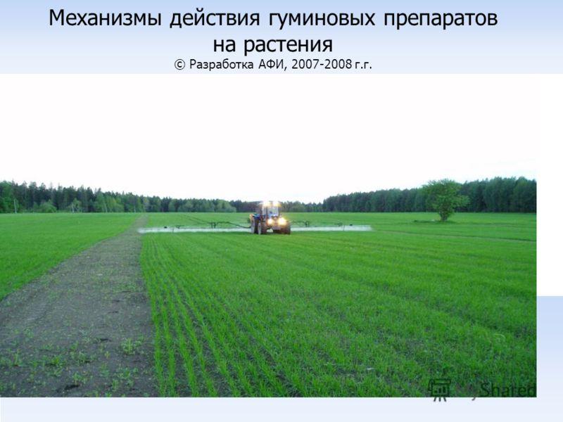 Механизмы действия гуминовых препаратов на растения © Разработка АФИ, 2007-2008 г.г.