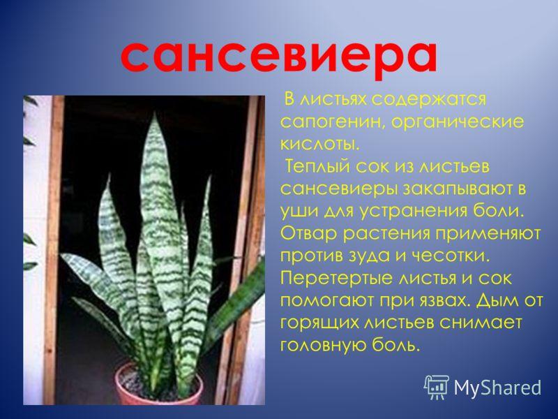 сансевиера В листьях содержатся сапогенин, органические кислоты. Теплый сок из листьев сансевиеры закапывают в уши для устранения боли. Отвар растения применяют против зуда и чесотки. Перетертые листья и сок помогают при язвах. Дым от горящих листьев