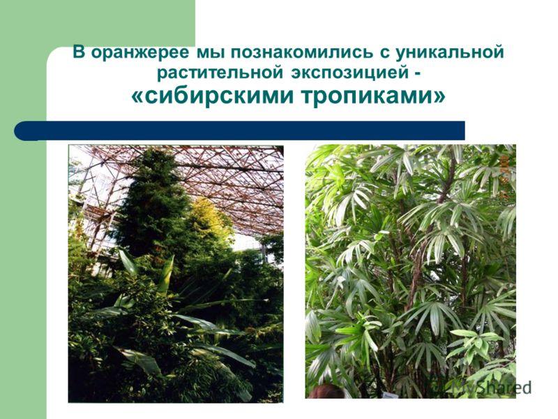 В оранжерее мы познакомились с уникальной растительной экспозицией - «сибирскими тропиками»