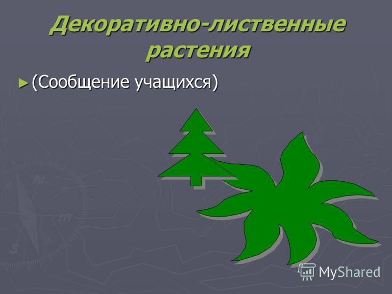 Декоративно-лиственные растения (Сообщение учащихся) (Сообщение учащихся)