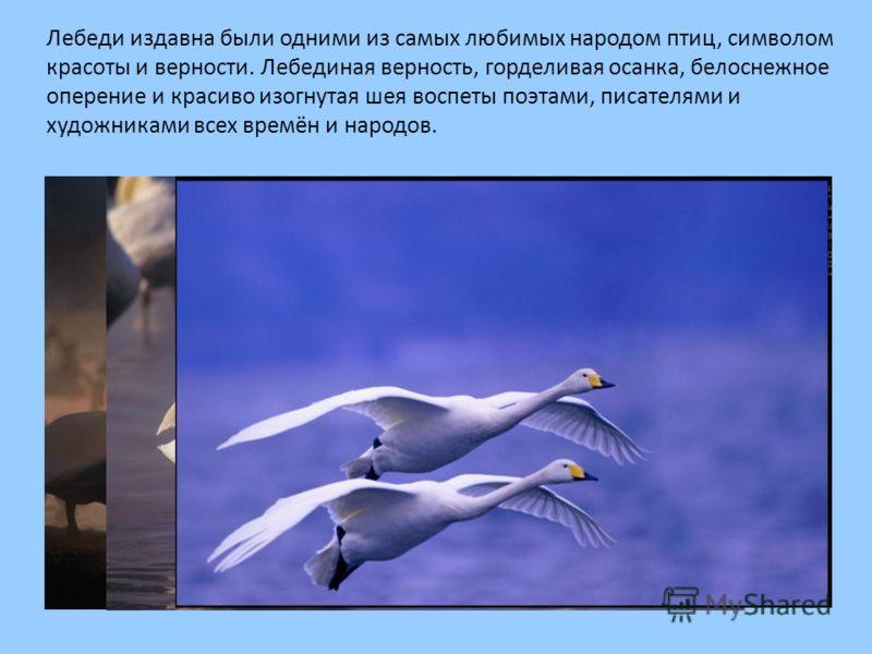 Лебеди издавна были одними из самых любимых народом птиц, символом красоты и верности. Лебединая верность, горделивая осанка, белоснежное оперение и красиво изогнутая шея воспеты поэтами, писателями и художниками всех времён и народов.