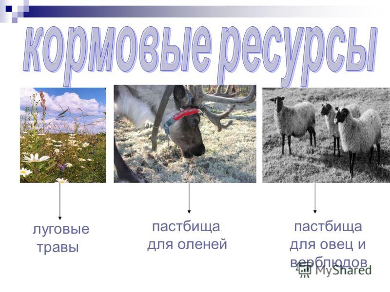 луговые травы пастбища для оленей пастбища для овец и верблюдов