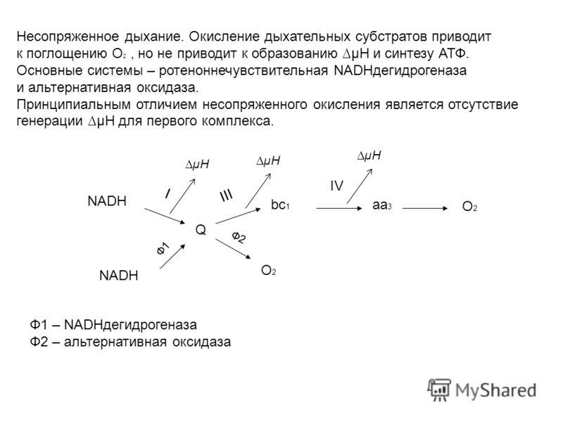 Несопряженное дыхание. Окисление дыхательных субстратов приводит к поглощению О 2, но не приводит к образованию µН и синтезу АТФ. Основные системы – ротеноннечувствительная NADHдегидрогеназа и альтернативная оксидаза. Принципиальным отличием несопряж