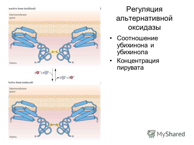 Регуляция альтернативной оксидазы Соотношение убихинона и убихинола Концентрация пирувата
