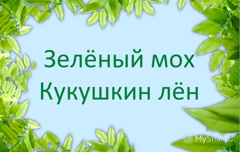 Зелёный мох Кукушкин лён