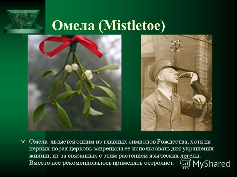Омела (Mistletoe) Омела является одним из главных символов Рождества, хотя на первых порах церковь запрещала ее использовать для украшения жилищ, из-за связанных с этим растением языческих легенд. Вместо нее рекомендовалось применять остролист.