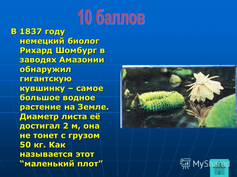 В 1837 году немецкий биолог Рихард Шомбург в заводях Амазонии обнаружил гигантскую кувшинку – самое большое водное растение на Земле. Диаметр листа её достигал 2 м, она не тонет с грузом 50 кг. Как называется этотмаленький плот
