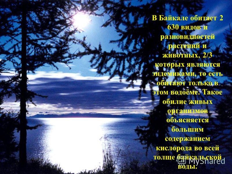 В Байкале обитает 2 630 видов и разновидностей растений и животных, 2/3 которых являются эндемиками, то есть обитают только в этом водоёме. Такое обилие живых организмов объясняется большим содержанием кислорода во всей толще байкальской воды.