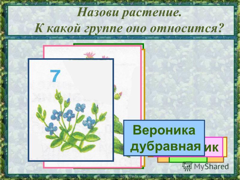 Назови растение. К какой группе оно относится? Сосна Калина ОрешникКлён ОдуванчикРепейник Вероника дубравная