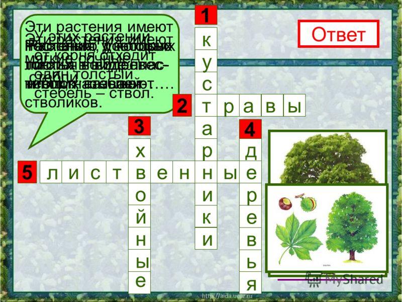 5 3 1 4 2 Эти растения имеют несколько довольно тонких, но одревес- невших стеблей- стволиков. Ответ к н р а т с у и к и Эти растения имеют мягкие сочные стебли. р авы Растения, у которых листья в виде иголок, называют … х е в о й н ы У этих растений