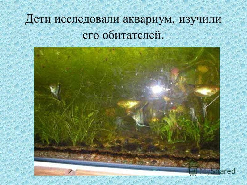 Дети исследовали аквариум, изучили его обитателей.