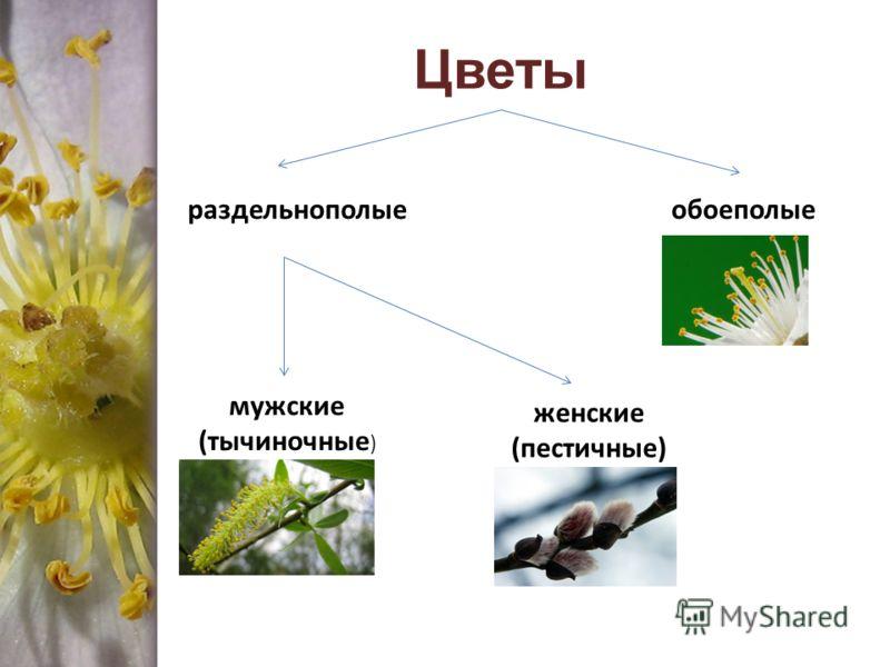 раздельнополыеобоеполые мужские (тычиночные ) женские (пестичные)
