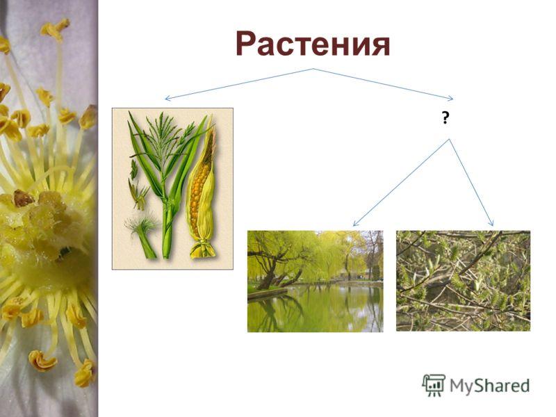 Растения ?
