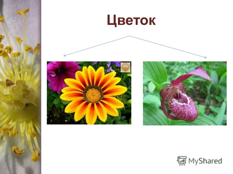 Приспособленный цветок