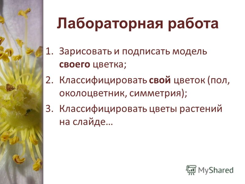 Лабораторная работа 1.Зарисовать и подписать модель своего цветка; 2.Классифицировать свой цветок (пол, околоцветник, симметрия); 3.Классифицировать цветы растений на слайде…