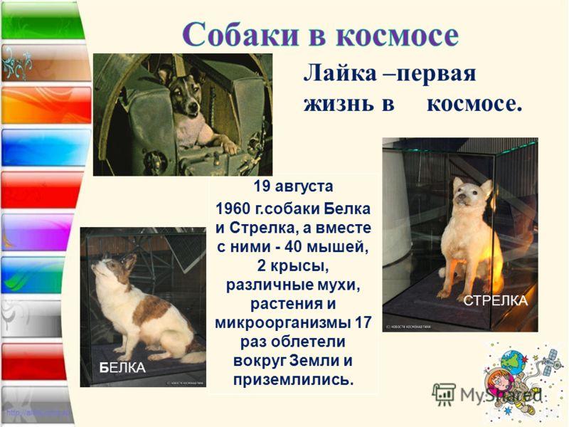 19 августа 1960 г.собаки Белка и Стрелка, а вместе с ними - 40 мышей, 2 крысы, различные мухи, растения и микроорганизмы 17 раз облетели вокруг Земли и приземлились. БЕЛКА СТРЕЛКА Лайка –первая жизнь в космосе.