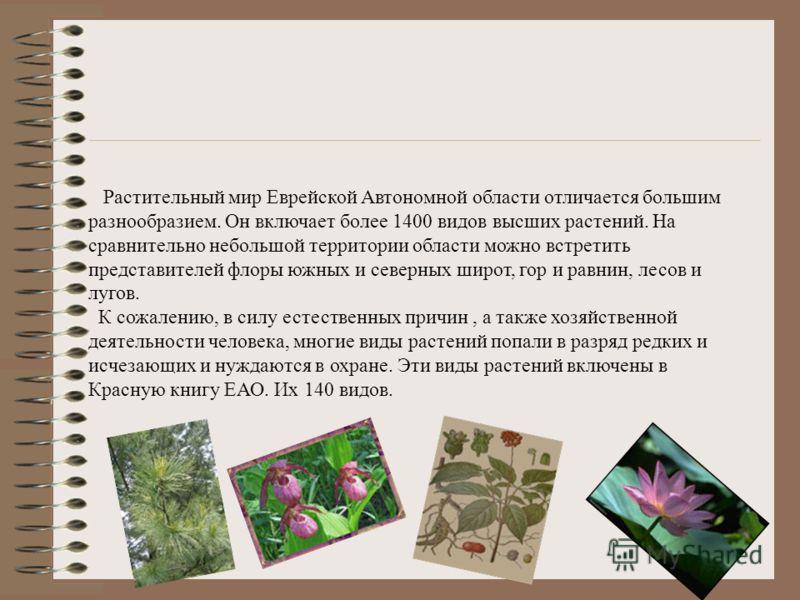 Растительный мир Еврейской Автономной области отличается большим разнообразием. Он включает более 1400 видов высших растений. На сравнительно небольшой территории области можно встретить представителей флоры южных и северных широт, гор и равнин, лесо
