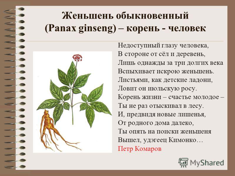 Женьшень обыкновенный (Panax ginseng) – корень - человек Недоступный глазу человека, В стороне от сёл и деревень, Лишь однажды за три долгих века Вспыхивает искрою женьшень. Листьями, как детские ладони, Ловит он июльскую росу. Корень жизни – счастье