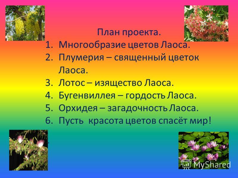 План проекта. 1.Многообразие цветов Лаоса. 2.Плумерия – священный цветок Лаоса. 3.Лотос – изящество Лаоса. 4.Бугенвиллея – гордость Лаоса. 5.Орхидея – загадочность Лаоса. 6.Пусть красота цветов спасёт мир! т