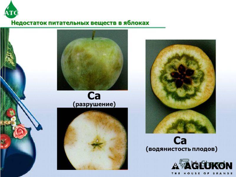 Недостаток питательных веществ в яблоках Ca (разрушение) Ca (водянистость плодов)