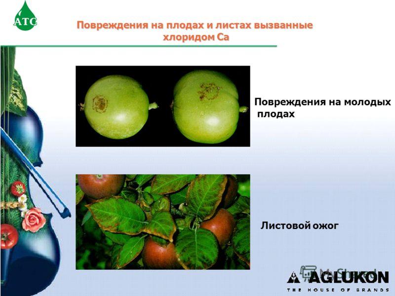 Повреждения на плодах и листах вызванные хлоридом Са Повреждения на молодых плодах Листовой ожог