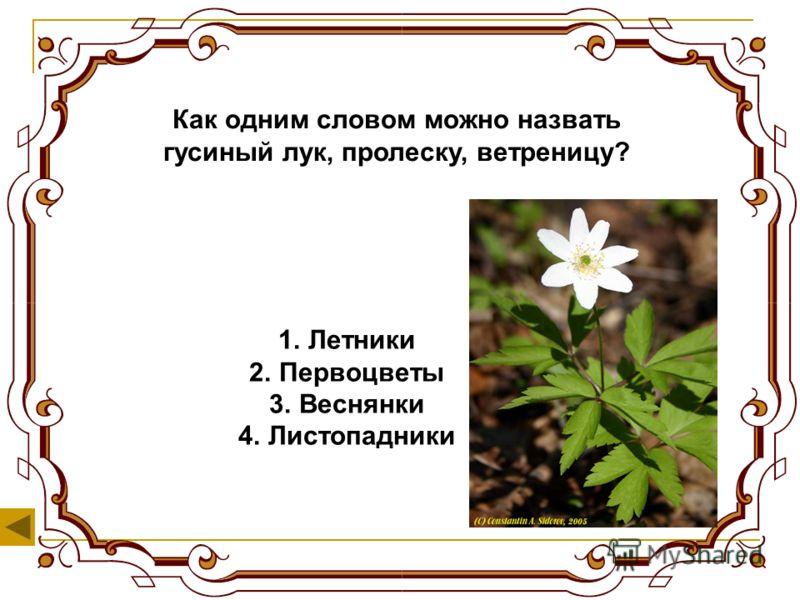 Как называется подземная часть растения? 1.Лист 2.Корень 3.Цветок 4.Стебель