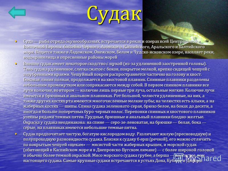 Судак Суда рыба отряда окунеообразных, встречается в реках и озерах всей Центральной и Восточной Европы, бассейна Черного, Азовского, Каспийского, Аральского и Балтийского моря. Водится также в Ладожском, Онежском, Белом и Чудско - исковском озере, н