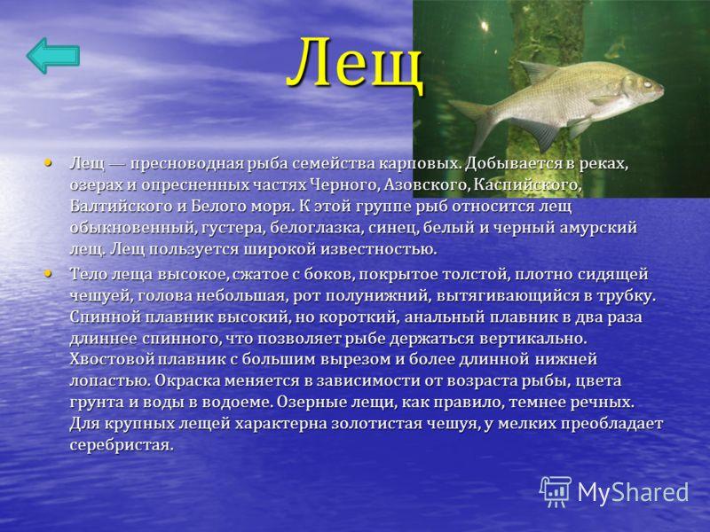 Лещ Лещ пресноводная рыба семейства карповых. Добывается в реках, озерах и опресненных частях Черного, Азовского, Каспийского, Балтийского и Белого моря. К этой группе рыб относится лещ обыкновенный, густера, белоглазка, синец, белый и черный амурски