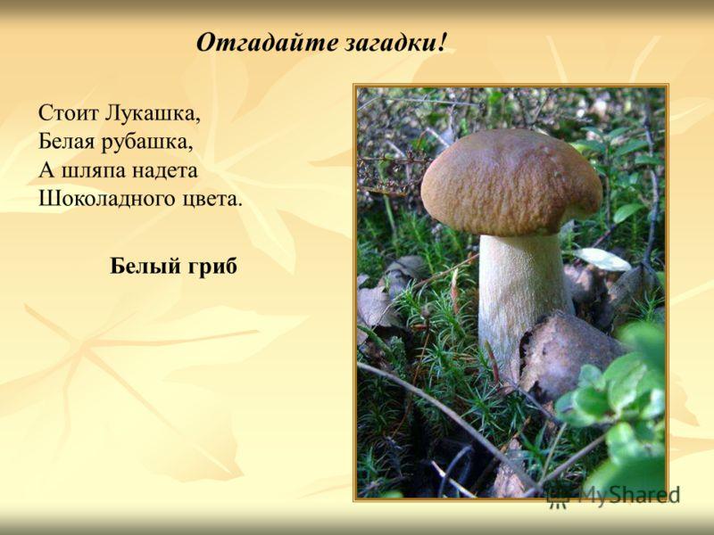 Отгадайте загадки! Стоит Лукашка, Белая рубашка, А шляпа надета Шоколадного цвета. Белый гриб Отгадайте загадки! Стоит лукашка, белая рубашка, А шляпа надета шоколадного цвета. Белый гриб.