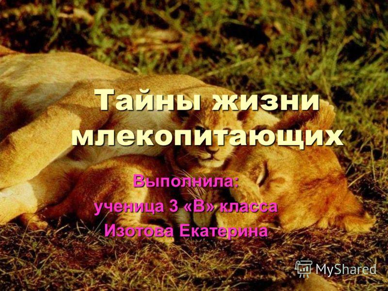 Тайны жизни млекопитающих Выполнила: ученица 3 «В» класса Изотова Екатерина
