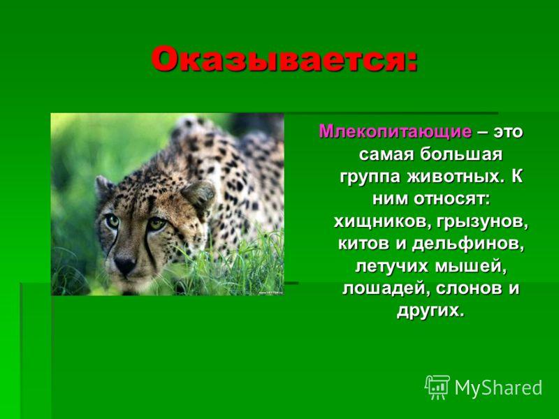 Оказывается: Млекопитающие – это самая большая группа животных. К ним относят: хищников, грызунов, китов и дельфинов, летучих мышей, лошадей, слонов и других.