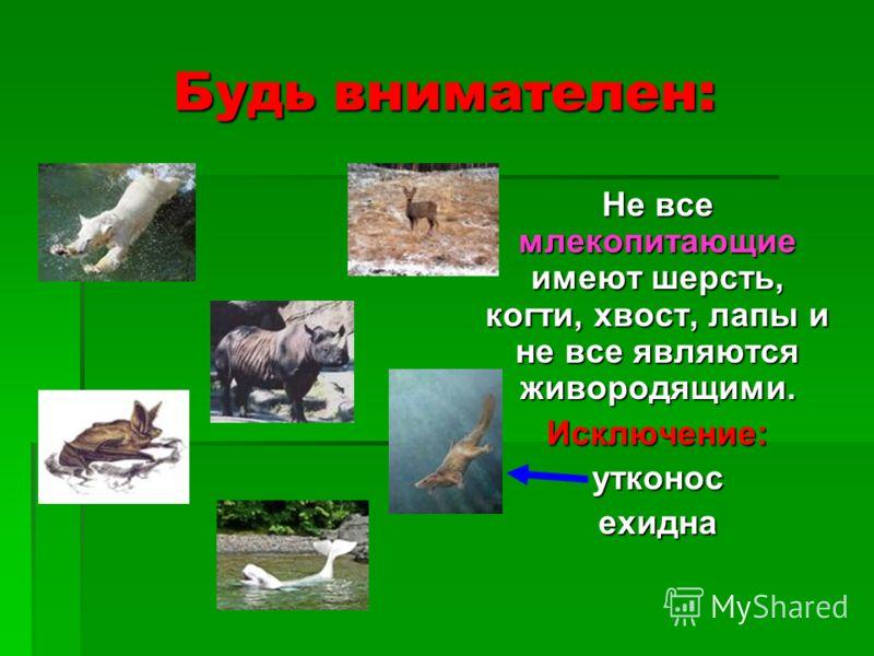Будь внимателен: Не все млекопитающие имеют шерсть, когти, хвост, лапы и не все являются живородящими. Исключение:утконосехидна