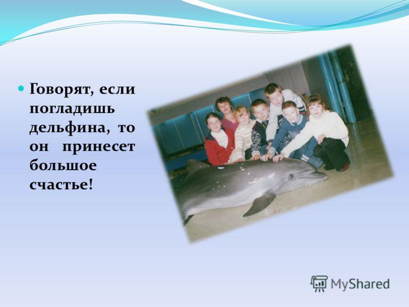 Говорят, если погладишь дельфина, то он принесет большое счастье!